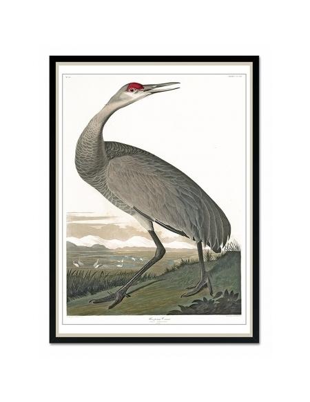 Obraz Ptak 1