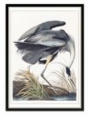 Obraz Ptak 2